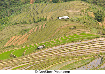 Sloping paddy fields in Sapa, Vietnam