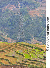 Sapa rice crops and electric high voltage pole on mountain,...
