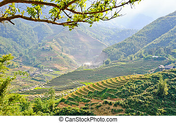 Moutain view of Sapa rice terraced fields, Vietnam