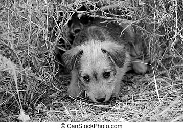 Maybe I yours? - Sad lonely homeless puppy looking in the...