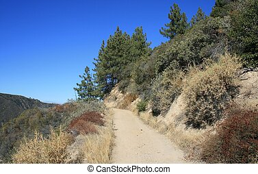 Indian Truck Trail 4 - Dirt road along a pine covered...