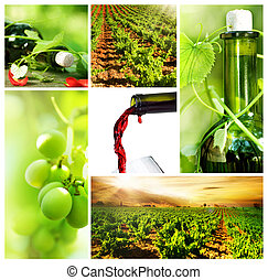 Wine Beautiful Grapes Collage