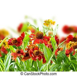 Été, résumé, fleurs, fond