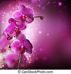 borda, flor, desenho, orquídea