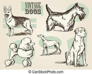 Vintage Dog Illustrations - Classic Retro Ornate Dog...