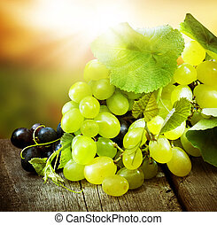 Grapes. Grapevine Over Vineyard Background - Grapes....
