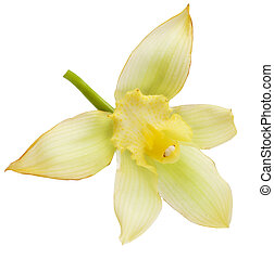 vainilla, flor