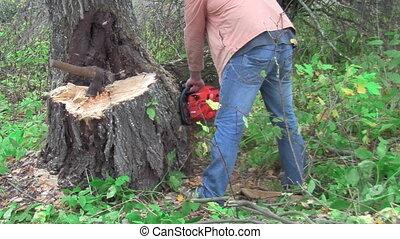 sawed a tree