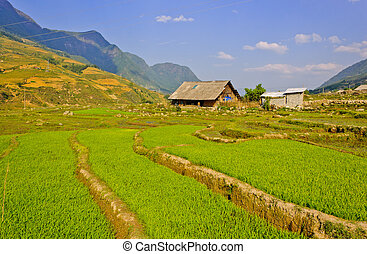 Sapa rice terraces, Vietnam