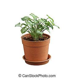 el, Crecer, popularidad, pequeño, árbol,...
