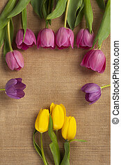 view of yellow and pink tulip flowers