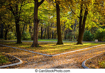 Autumn forest with two paths