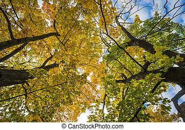 Colorful leaves in Saxon Switzerland - Trees with colored...