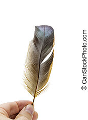 Holding bird feather on white - Holding bird natural feather...
