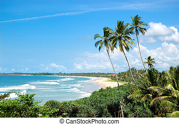 Beach, palms and turquoise water of Indian Ocean, Bentota,...