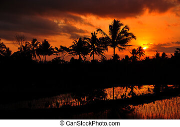 Beautiful Sunset - Reflection of Sunset in the Rice Field