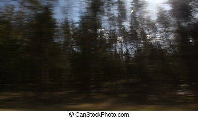 view on forest from moving car