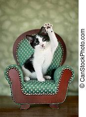 Little Kitten Sitting in a Chair - Cute Kitten in a Chair...