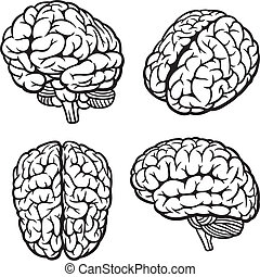 Human Brain Set of four views Vector Illustration