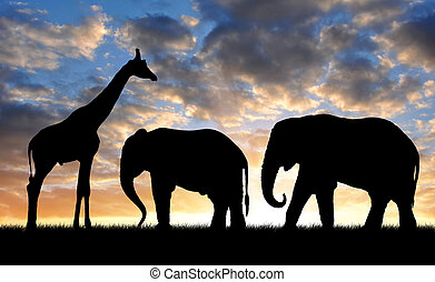 silhouette elephants and giraffe in the sunset