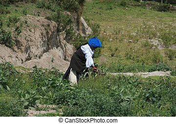 Picking Plants in a Pasture