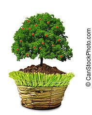 growing apple tree in pot