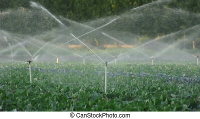 Irrigation systems in a green