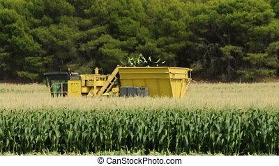 Harvester reaps green corn