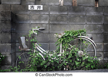Bike - Growing plant on a Bike