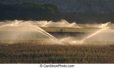Irrigation systems on sunset.