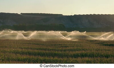 Irrigation systems on sunset. Corn plantation