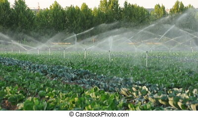 Irrigation systems in a green veget