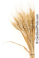 ear of barley  isolated on white