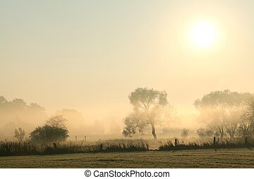 Rural landscape at dawn - Rural landscape in a misty October...