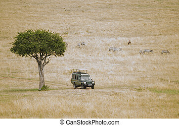 4x4 on Safari - An all terrain vehicle on a road in the...