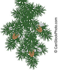pine branch - an illustration of a snowy pine bough