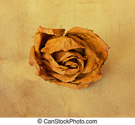 Vintage background with old paper, roses dry.