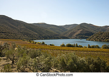 Vineyards at Douro river valley, Portugal - Vineyards at...