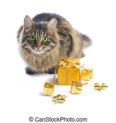 cat with gold gift boxes on white background