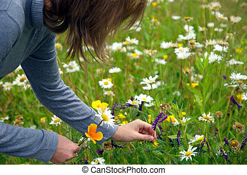 Lady picking flowers - Lady picking up wild flowers in a...