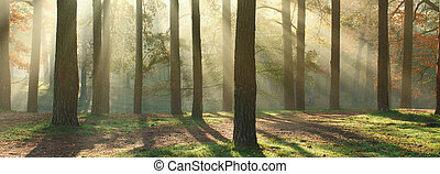 Sunny forest panorama - Panoramic image of morning forest...