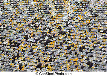Moss on roof - Grey slate roof with moss and lichen in...