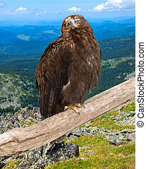 eagle  against wildness