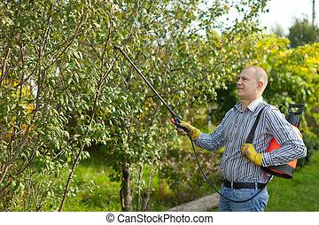 Man spraying tree branches in garden