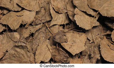 Female Hand Wipes Fallen Leaves - Young woman's hand wiping...