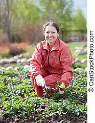 woman takes care of the beds of strawberries in the garden...