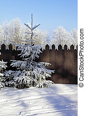 Forest and the high wooden fence - A snowy winter morning in...