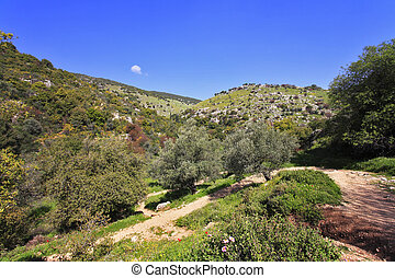 Footpath in low mountains The north of Israel, mountain...