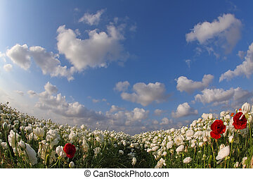 "The white and red flowers by a lens ""Fish eye"" - The..."