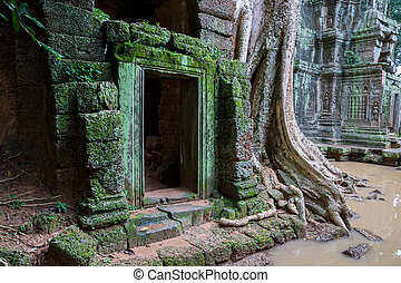 Ta Prohm, Angkor Wat - Trees in Ta Prohm temple in Angkor...